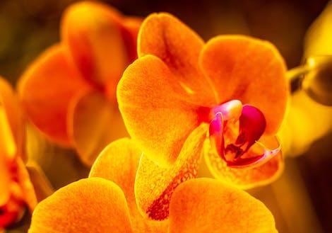 Photograph of oranges