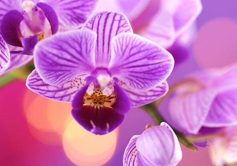 Photograph of purples