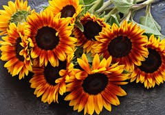 A handful of cut red sunflowers, laid upon a countertop, await their vase