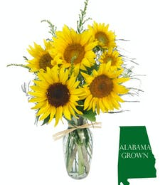 Alabama Sunflowers