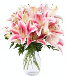 Stargazer Lily Surprise